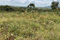 Universities join forces to understand locust swarming