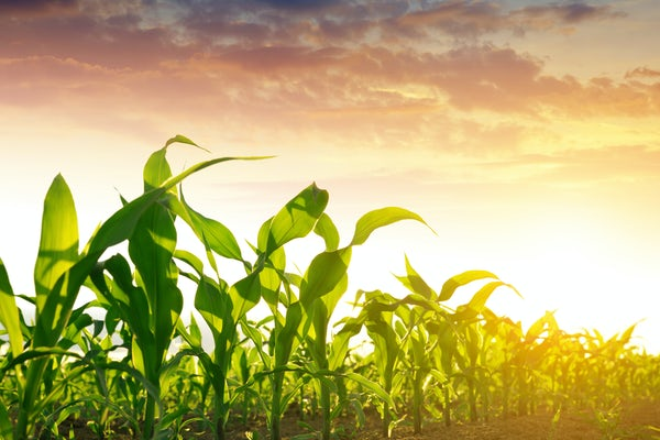 Pesticide use reduces the loss of crops to pests, but the impact of those pesticides on the environment as they break down remains problematic. (Credit: iStock photos)
