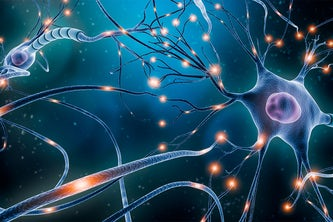 A multidisciplinary and multi-institutional team of researchers will probe brain cell dynamics with a three-year, $3.75 million Multidisciplinary University Research Initiative (MURI) grant from the Army Research Laboratory.