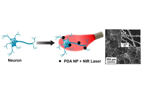 Schematic of polydopamine nanoparticle (PDA NP)-mediated photothermal stimulation of neurons. PDA nanoparticles localized on the neuron membrane (blue figure, left), modulates the neural activity through photothermal conversion of NIR light (red image, center).  On right: Scanning electron microscopy (SEM) image of neurons on electrode (inset: higher magnification SEM).