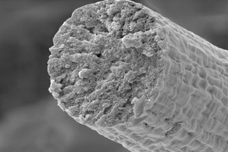 Researchers at the McKelvey School of Engineering at Washington University in St. Louis have developed a synthetic chemistry approach to polymerize proteins inside of engineered microbes. This enabled the microbes to produce the high molecular weight muscle protein, titin, which was then spun into fibers. In the future, such material could be used for clothing, or even for protective gear. (Image: Fuzhong Zhang Lab)