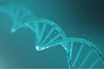 Research from the lab of Kimberly Parker has upended common assumptions about the lifespan of double-stranded RNA that may prove useful to fields from agriculture to medicine. (Image: Shutterstock)